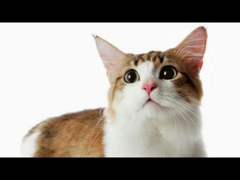 Kenapa kucing jika dibuang bisa pulang ke rumah lagi? Ini penjelasan ilmiahnya!
